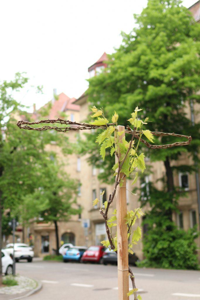 Rankstab mit Weinblättern, dahinter eine Straße mit Gründerzeithäusern