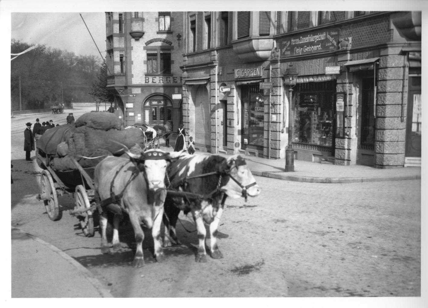 Historisches Foto, das ein Ohsengespann in Stuttgart Berg zeigt