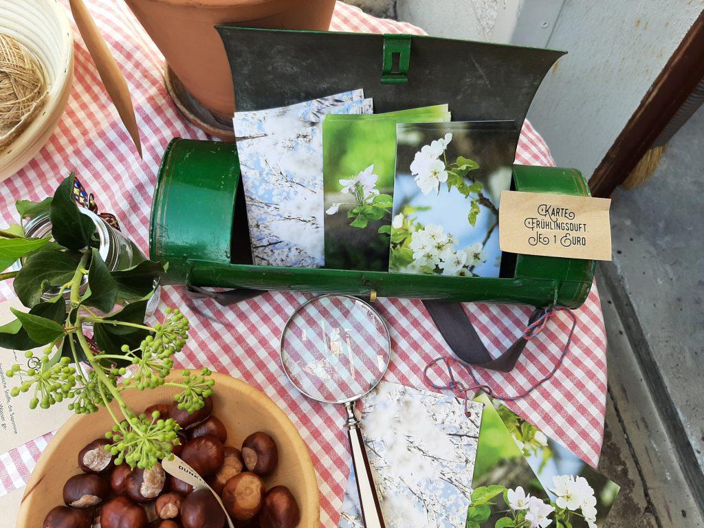 Tisch mit Lupe,Kastanien und Botanisiertrommel