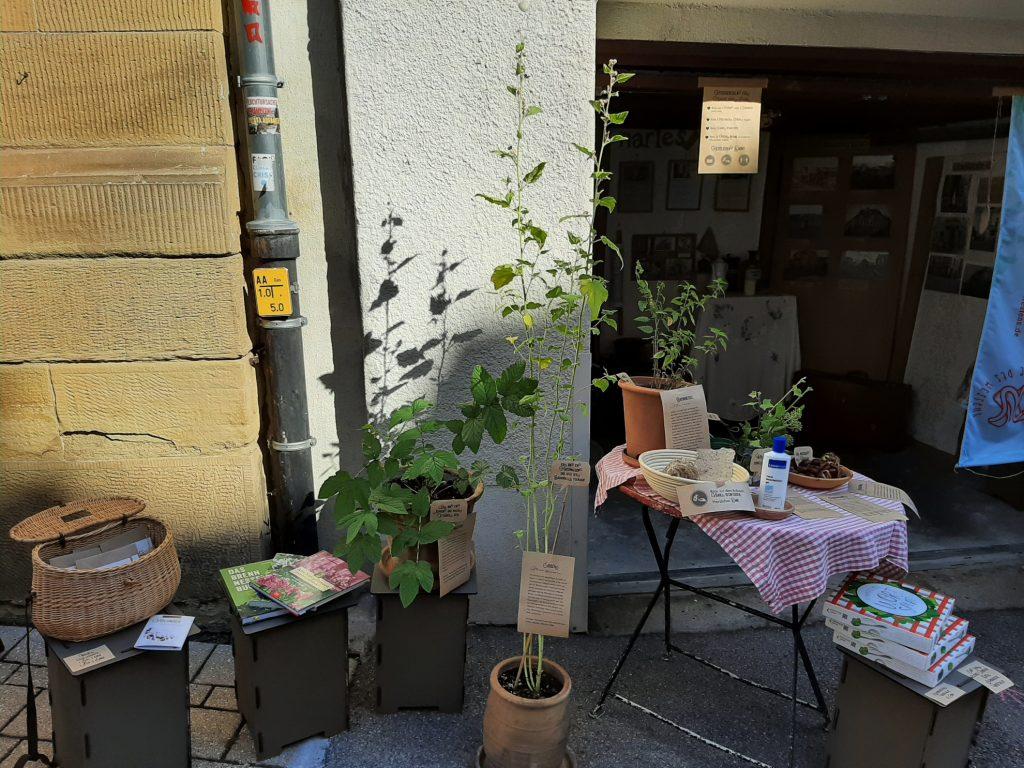 Pflanzen vor einem Garagenmuseum